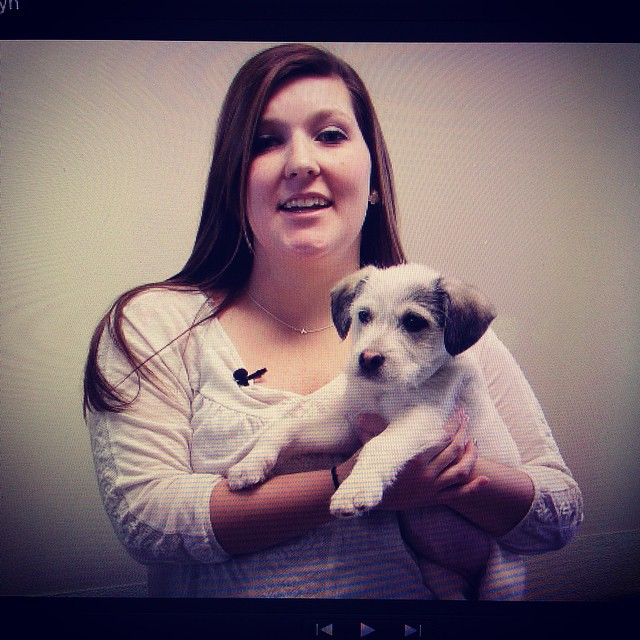 Darian Lyon reports about holiday pet adoptions on HTV 217.